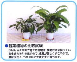 観葉植物の比較試験